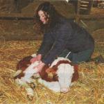 Ostéopathie bovine (veau)